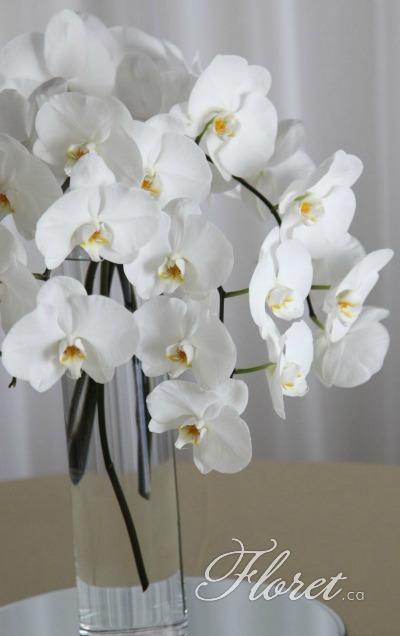 Phaleonopsis Bridal Bouquet Toronto | Floret.ca